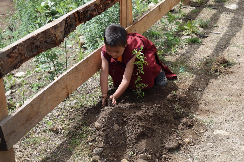 Plantation 18