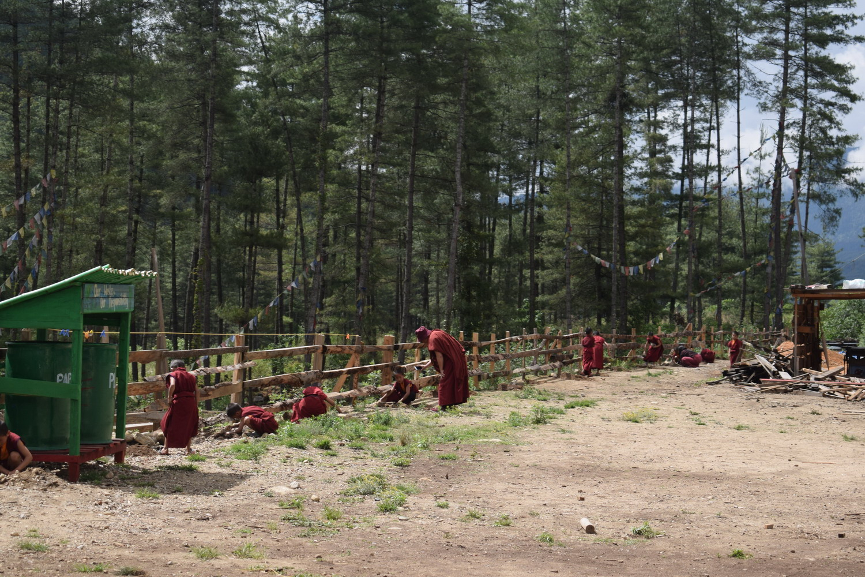 Plantation 35