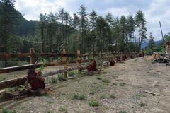 Plantation 15